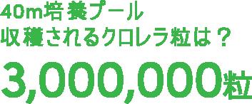 40m培養プール収穫されるクロレラ粒は?3,000,000粒