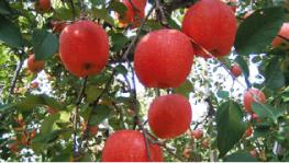 とどろき果樹園