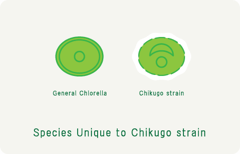 Unique to Chikugo strain