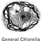 General Chlorella