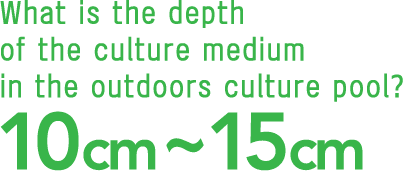 What is the depth of the culture medium in the outdoors culture pool?10cm~15cm